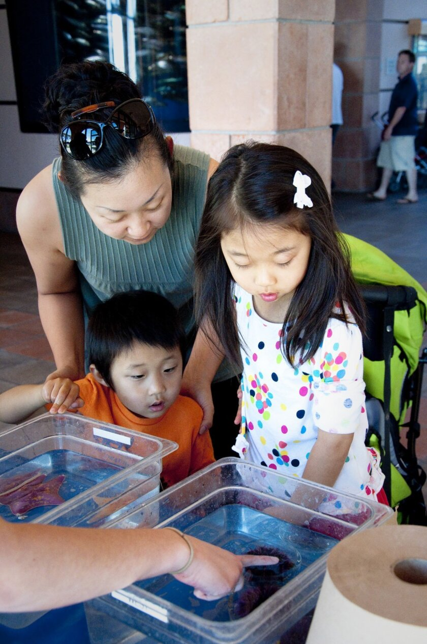At Sea Days events, visitors of all ages can explore their inner marine scientist, Courtesy