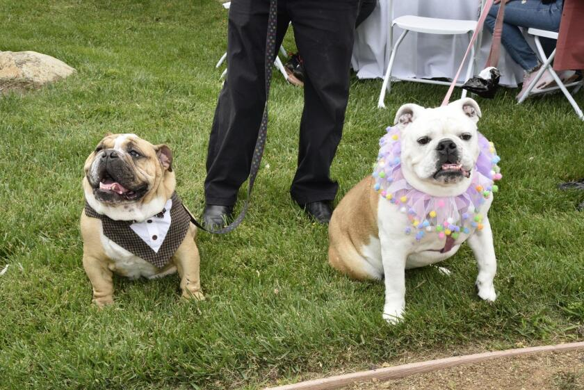 Lou and Lulu dressed up for the event