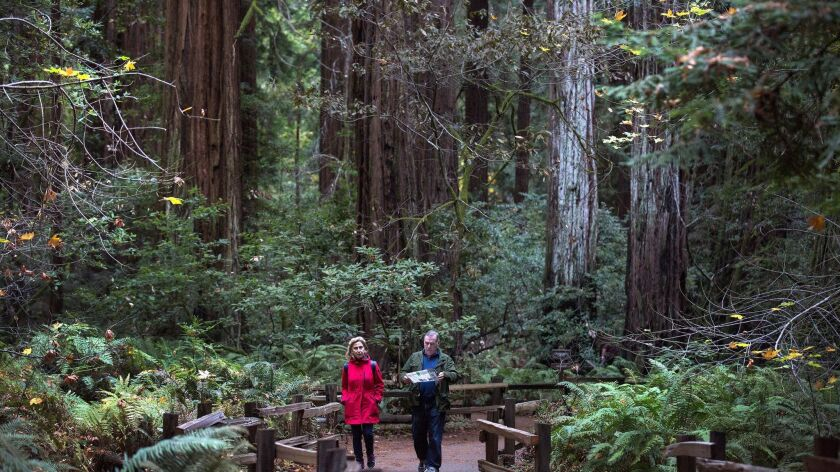 Visitors on the Fern Creek Trail walk among giant redwood trees at Muir Woods National Monument.