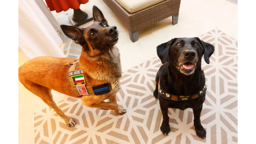If Megan Leavey Left You Wanting To Give A Military Dog A Fur Ever Home Read This Los Angeles Times