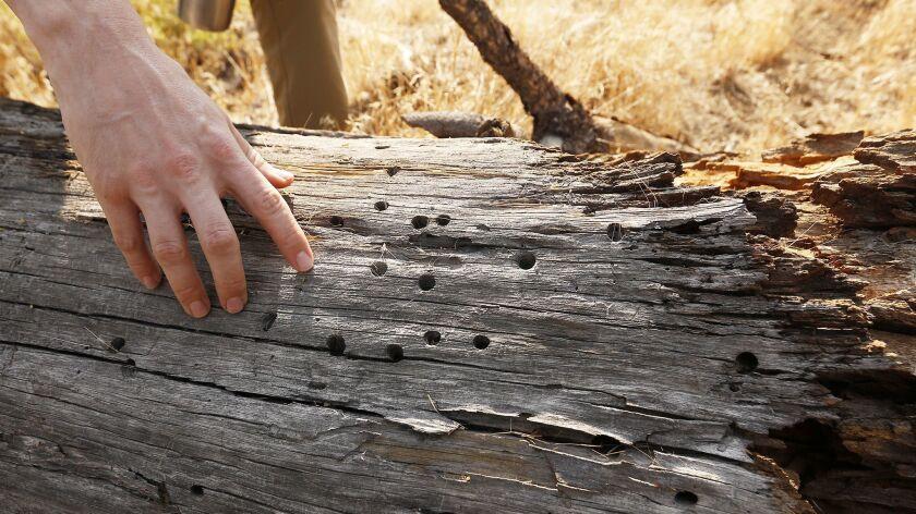 Evidence of woodpecker and bug species in the Tecuya Ridge area.