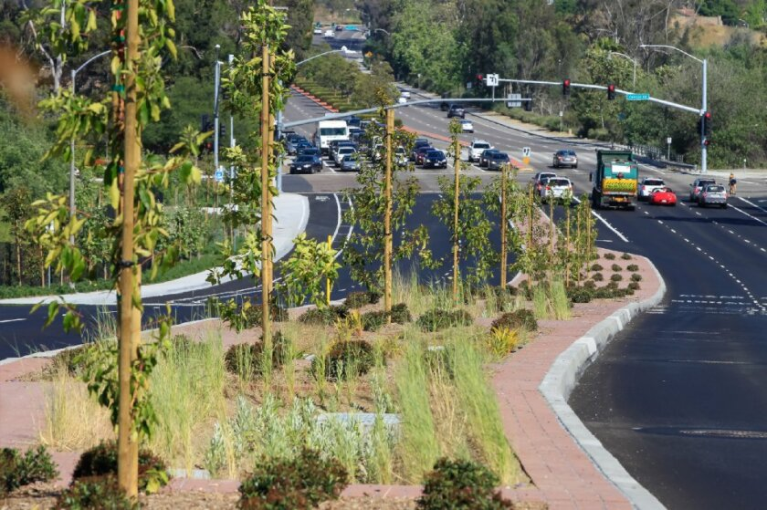 Newly planted trees in 2017 in the center median of El Camino Real south of Cannon Road.