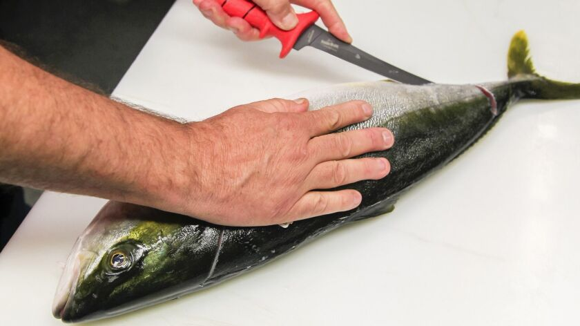 In this Union-Tribune file photo, farm-raised hiramasa is cut into all of its edible parts by Tommy Gomes, of Catalina Offshore Products, which is committed to sustainable fishing.