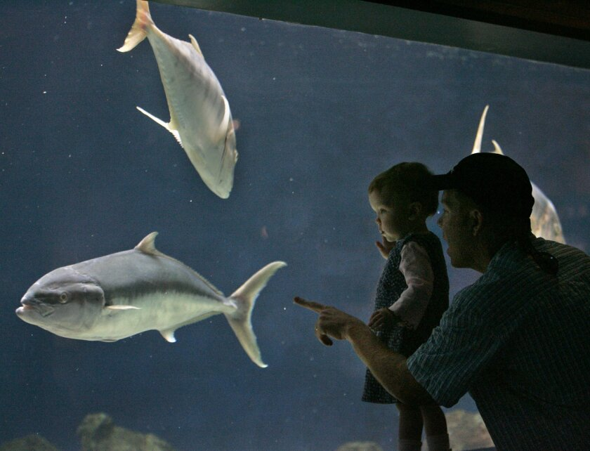 SL_aquarium252250x010_2-07-2006_San Diego, CA._ Thirteen-month-old Dylan Louise Bunyak draws her share of attention from fish native to Mexican waters at the Birch Aquarium at Scripps. At right is her father Steve Bunyak from Cardiff-by-the-Sea.  SCOTT LINNETT/San Diego Union-Tribune