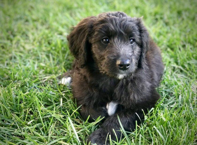 Meet Gov. Jerry Brown new dog