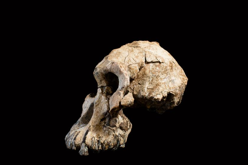A side view of the cranium.