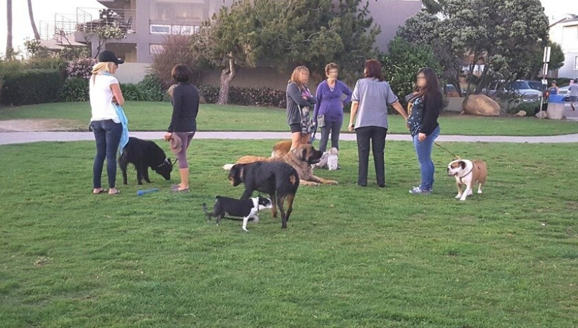 Nearby residents gather at Calumet Park with their off-leash and on-leash dogs.
