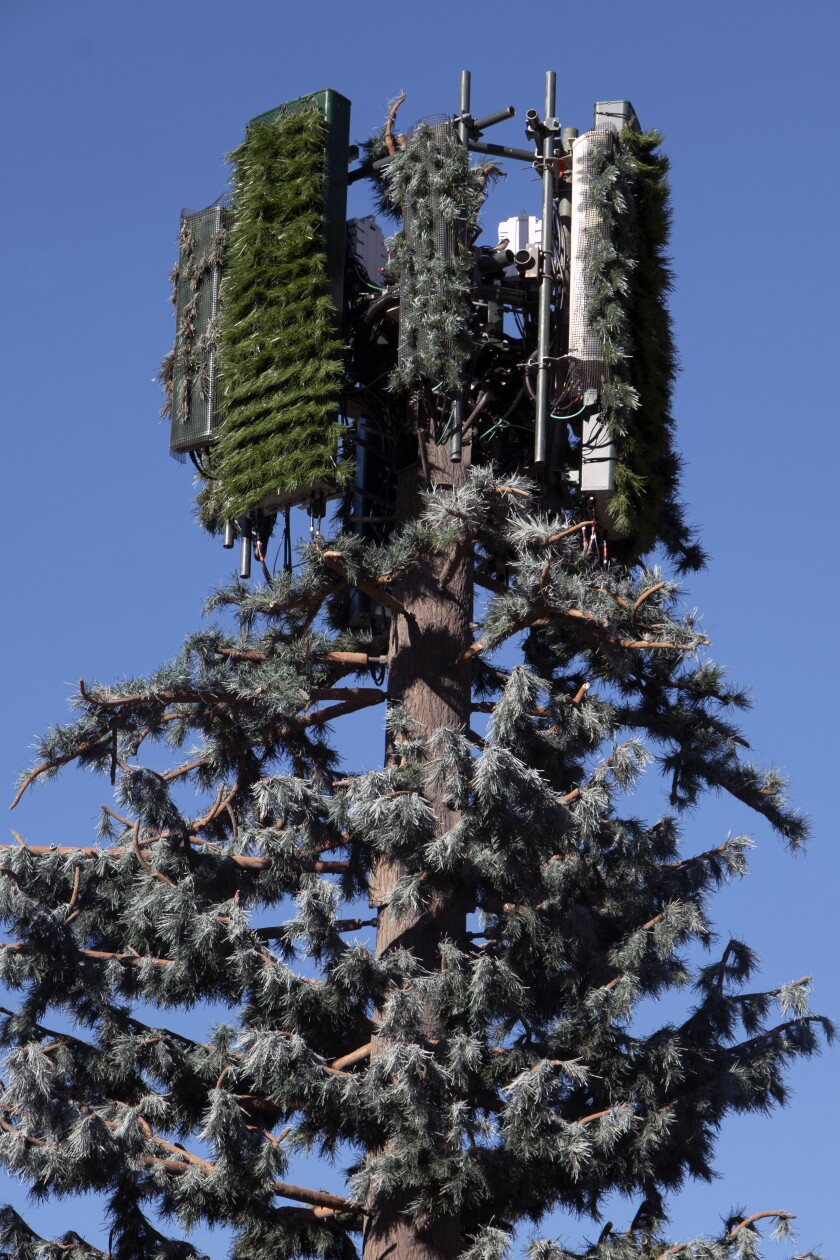 A cell tower disguised as a pine tree.