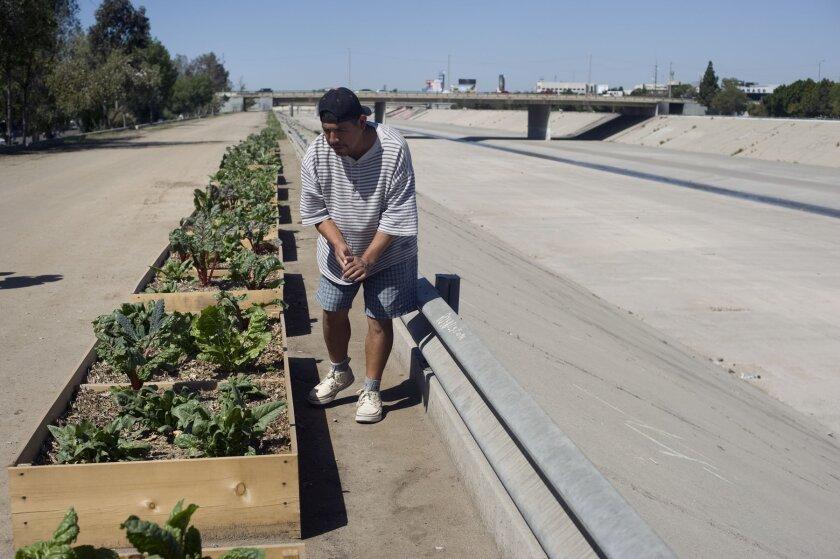 Juan Carlos Sánchez, deportado a Tijuana hace 7 años, revisaba las camas de hortalizas de Bordofarms el 7 de marzo, antes de ser removidas.David Maung/Enlace