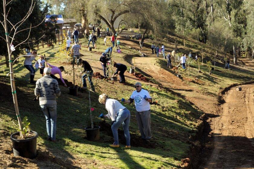 Tree planting at the Osuna Ranch