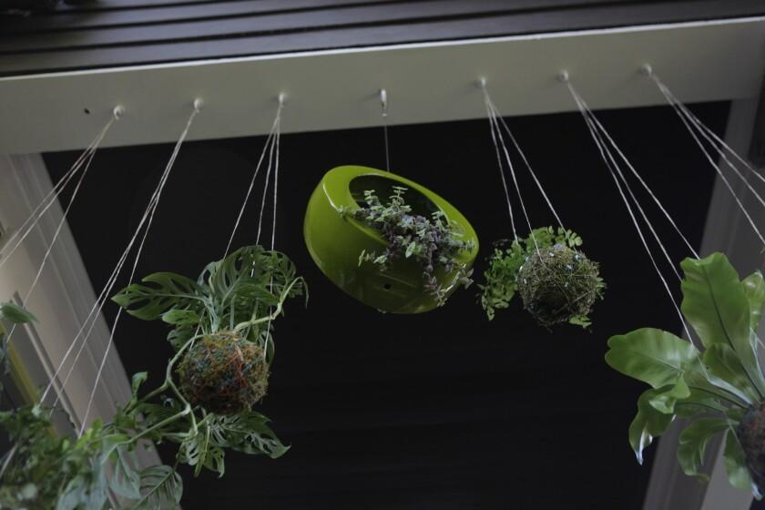 """A kokedama-style """"string garden."""""""