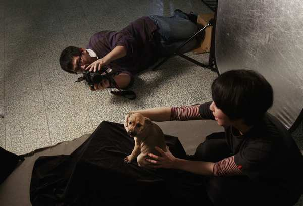 Taiwanese photographer Tou Chih-kang tries to make a portrait of a puppy before it is put down by lethal injection at a shelter in Taoyuan, northern Taiwan.