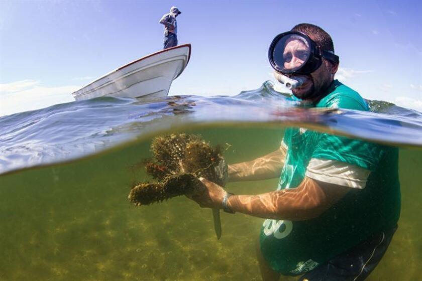 Fotografía cedida por Environmental defense Fund, fechada el 15 de septiembre de 2015, en la que se observa a un pescador desarrollando su labor en la Playa de Altata en Navolato, Sinaloa (México). EFE/ARCHIVO/SOLO USO EDITORIAL