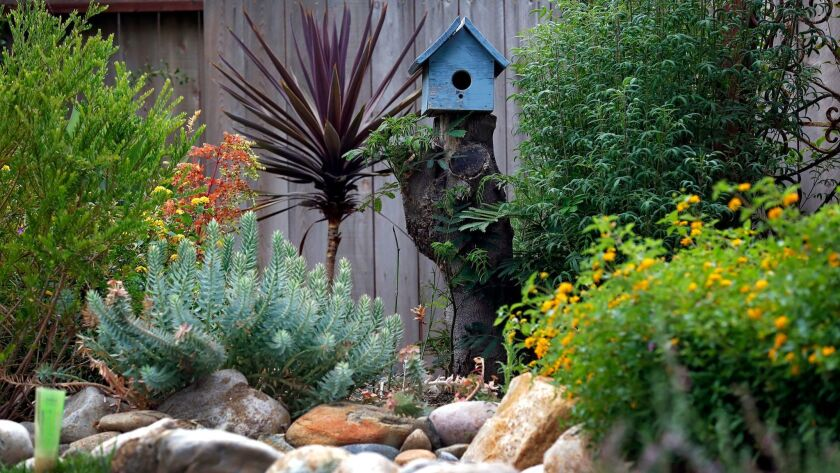 A section of the garden that Bendrick created at her parents' Del Cerro home.