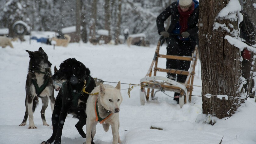 Documentary explores the dog racing industry and the annual Iditarod race. Written and directed by F