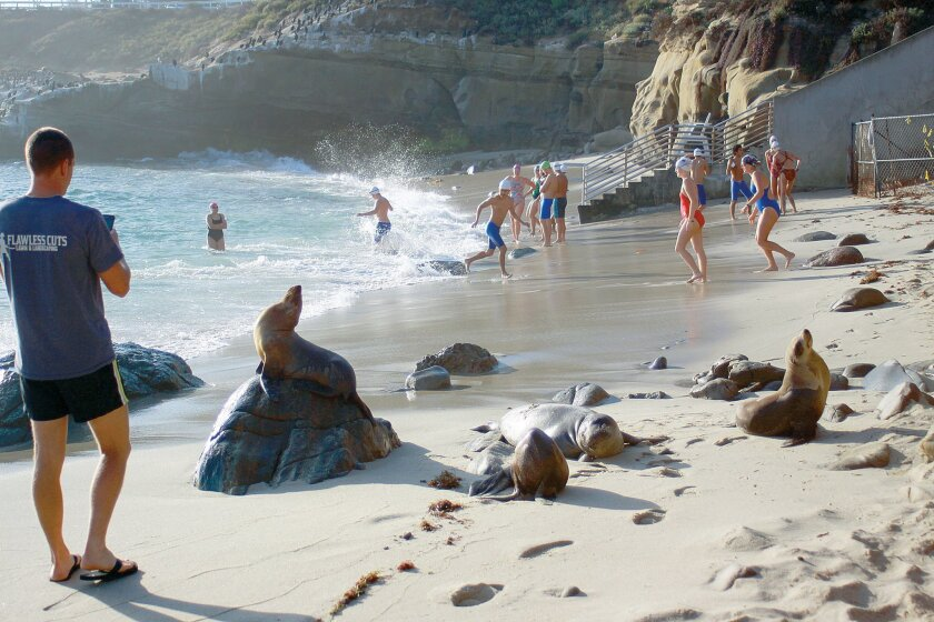 La Jolla Cove is frequented by swimmers, tourists, and lately, sea lions.