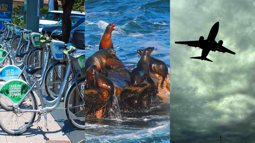 Ongoing matters of concern to many La Jolla residents include whether or not DecoBike should be allowed to install self-service, rental kiosks around town; the growing sea-lion population causing a nauseating stench at La Jolla Cove; and new flight paths increasing airplane noise in La Jolla.