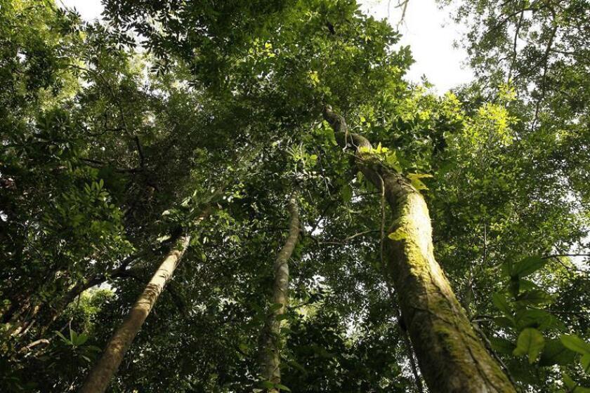 México iniciará fase piloto de mercado de carbono en las Américas en 2019