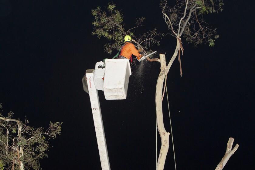 tn-dpt-me-balboa-tree-removal-20191014-1.jpg