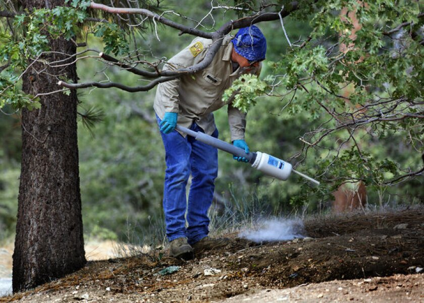 A Los Angeles County pest control worker applies insecticide powder to a rodent and squirrel hole to kill infected fleas at a campground near Wrightwood, Calif., in July. This month a boy in New Mexico contracted the disease, the first confirmed case of plague in the country this year.