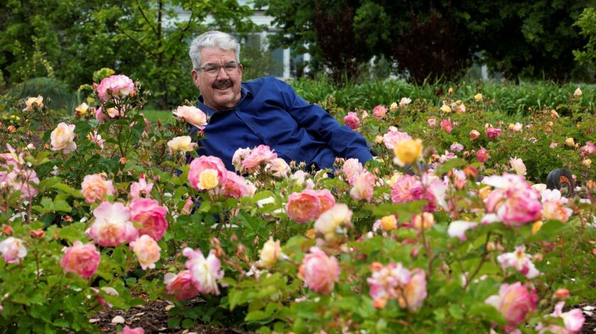 "Jeanette Marantos was reading a gardening blog when she came across an entry about ""Huntington's 100th,"" the special rose named for the Huntington's centennial year. Tom Caruth, above, is the rose garden curator there. He bred the rose while working at Weeks Roses in Pomona."