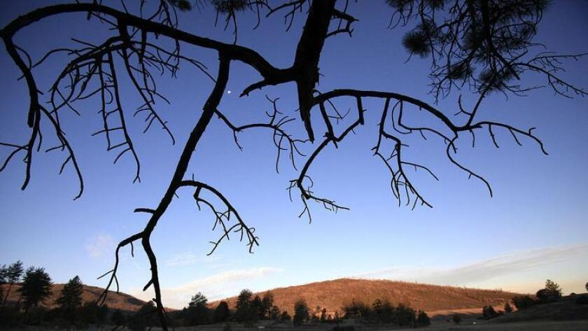 Cuyamaca Rancho State Park offers more than 100 miles of trails. (John Gastaldo)