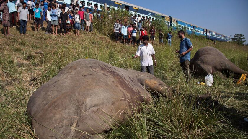 A passenger train passes as Indian veterinarians measure the carcasses of two elephants that were hit and killed by a train near Gauhati, India.