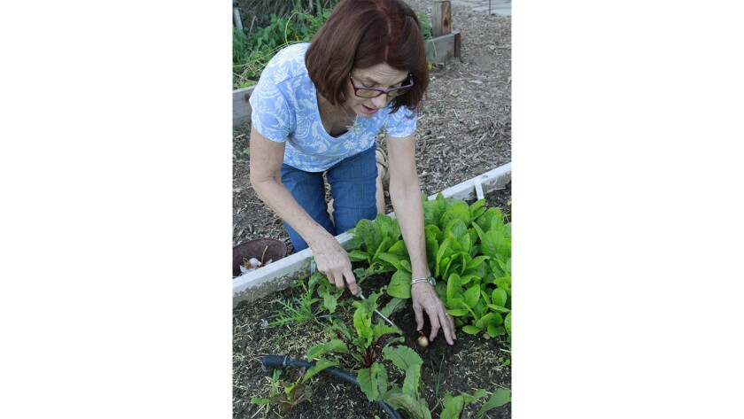 Lucy Heyming plants an onion in her garden.