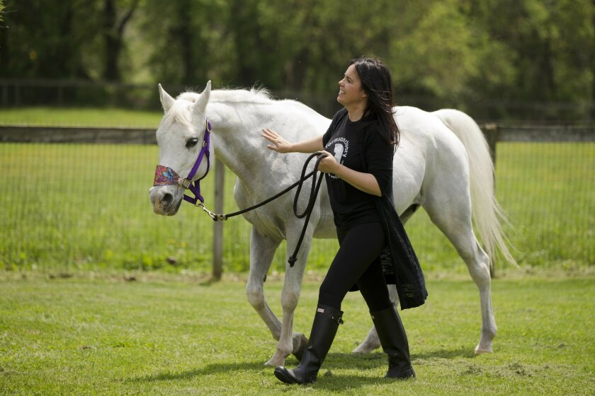 Tracey Stewart, leads Lily the horse she adopted away at the end of a news conference Wednesday, May 25, 2016, in Kennett Square, Pa. Doreen Weston, the former owner of the horse adopted by Jon Stewart and his wife Tracey that was portrayed as having been shot by paintballs over 100 times, said Wed