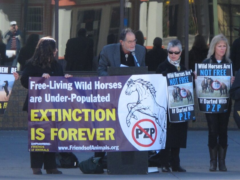 Craig Downer, second from left, a wildlife ecologist for Protect Mustangs, speaks at a rally in Sparks, Nev., on Feb. 26, 2015, protesting plans to roundup hundreds of wild horses in Nevada and inject dozens of the mares with a drug, PZP, that prevents them from reproducing for two years. The Burea