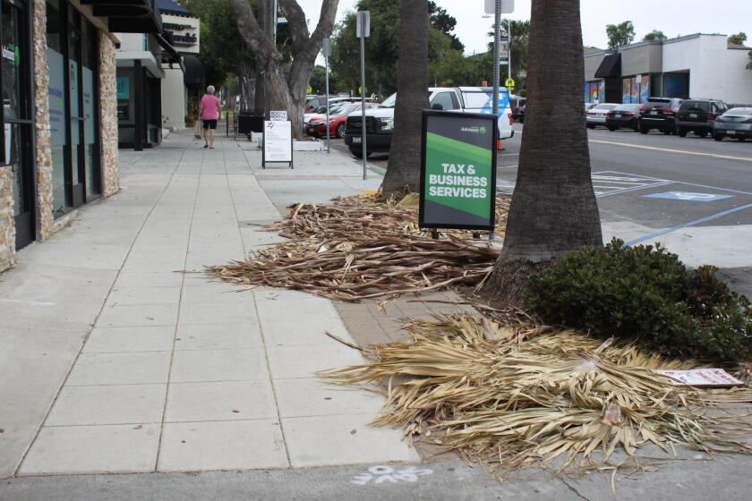 Will the City return soon to clean-up after its palm tree trimming project on Girard Avenue?