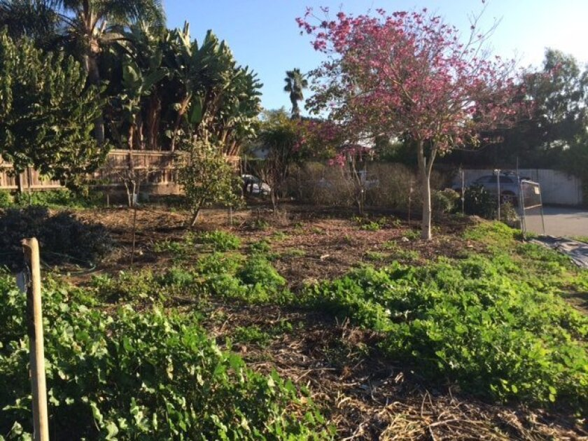 Elizabeth Cramer envisions a community garden in a vacant property near the Cedros Design District.