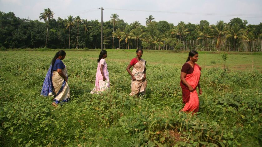 Part of a program in India's southern Kerala state, pictured in 2013, teaches women farming and othe