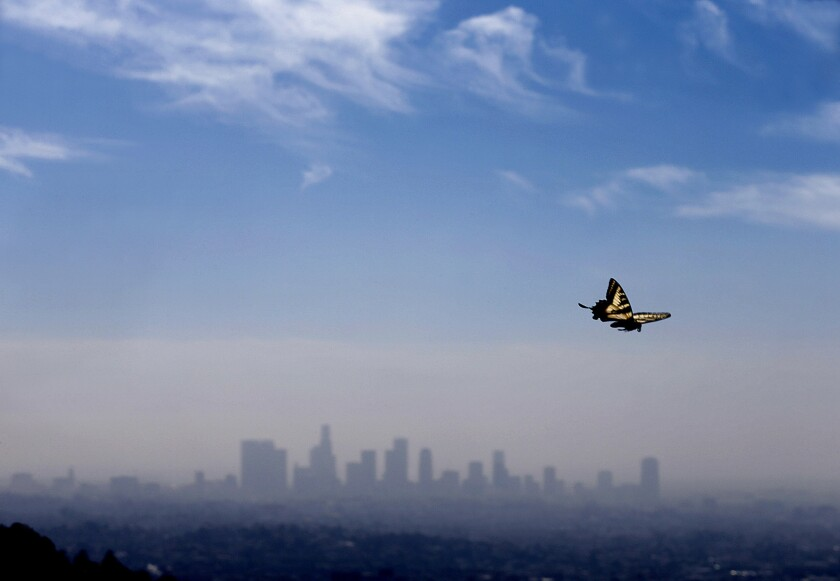 Los Angeles as a city has been viewed as both utopia and a last stop. A group of L.A. writers discusses how to get beyond the tropes. Seen here: A tiger butterfly sailing across the city's skyline in the spring.