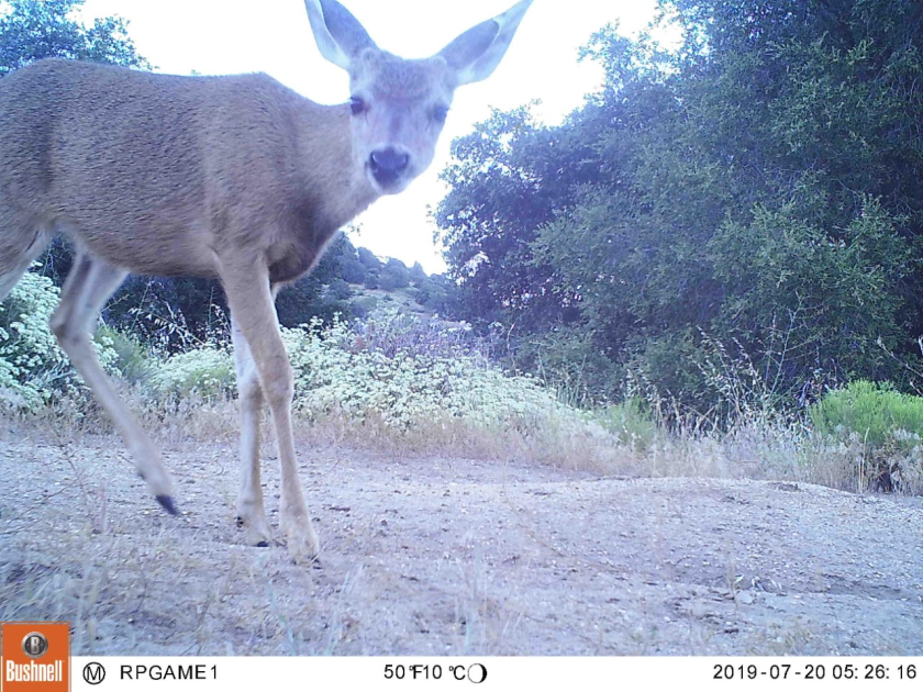 The Through-the-Lens Project will teach 6th—8th-grade students about wildlife through the lens of camera-trap photos taken in the San Dieguito River Valley.