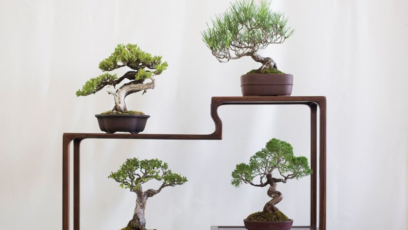 Bonsai trees on display during an annual exhibit at Bowers Museum in Santa Ana on Sept. 2.