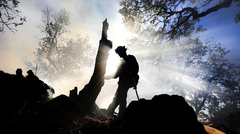 Cal Fire firefighter Owen Bradish douses hot spots around an oak tree snag near a brush fire in Santa Rosa, Calif., on Wednesday, Aug. 30, 2017.