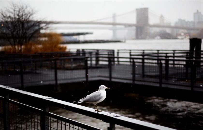 Una gaviota en el borde de la orilla del río Este, durante una tormenta de nieve en Nueva York (Estados Unidos) hoy, 2 de marzo de 2018. Se espera que la tormenta deje inundaciones en ciudades costeras del este del país. EFE
