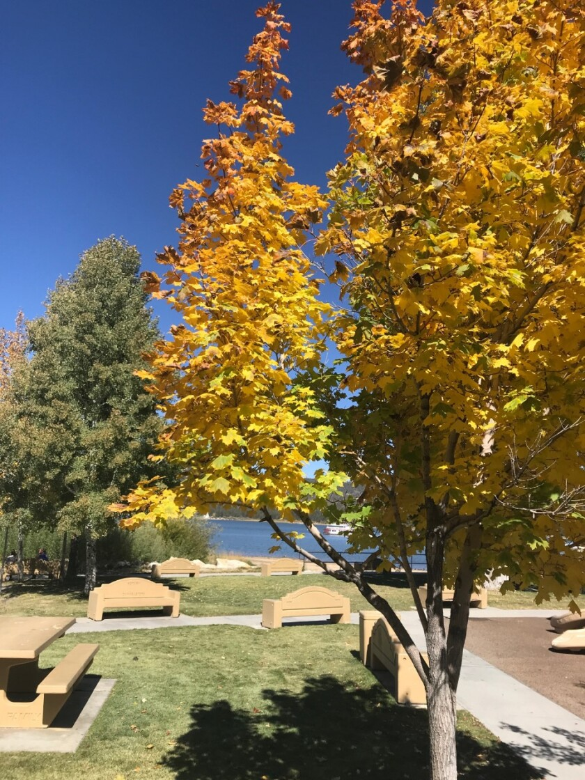 Fall colors 2019 in Big Bear Lake