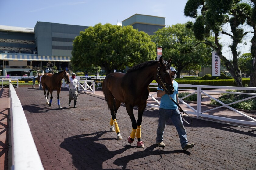 Grooms wearing face masks lead horses to the paddock at Santa Anita Park.