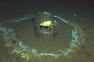 Un butoi aruncat, cu scurgeri de 3.000 de metri adâncime pe fundul oceanului lângă Insula Santa Catalina. (David Valentine / ROV Jason)