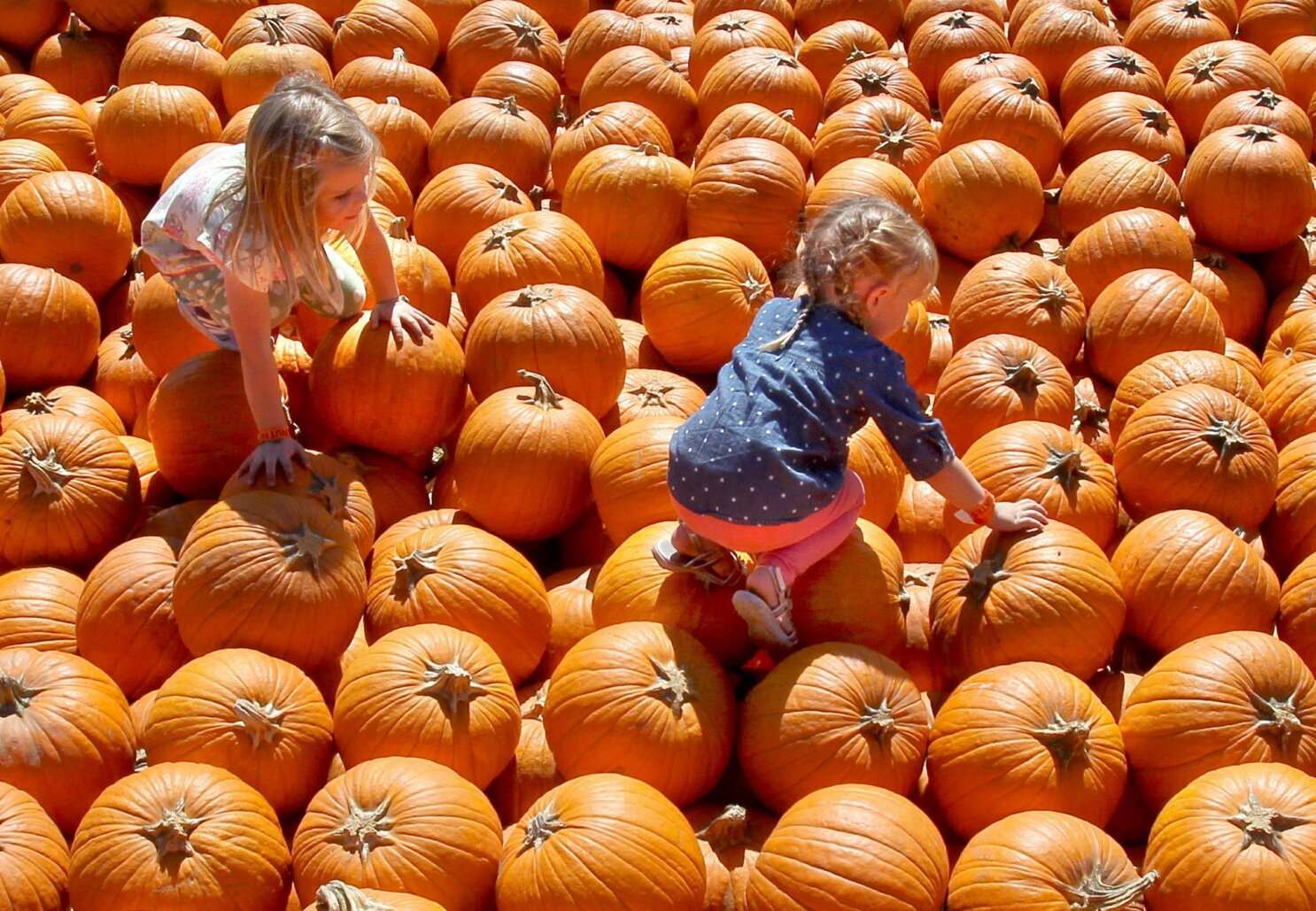 Pumpkin patches around San Diego County