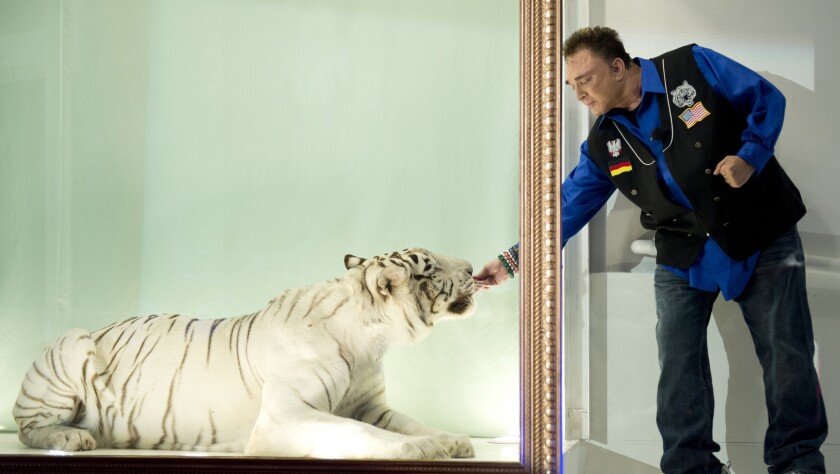 Roy Horn interacts with Mantecore, the tiger that once nearly killed him, during filming in 2013 of a German television documentary. The white tiger died March 19.