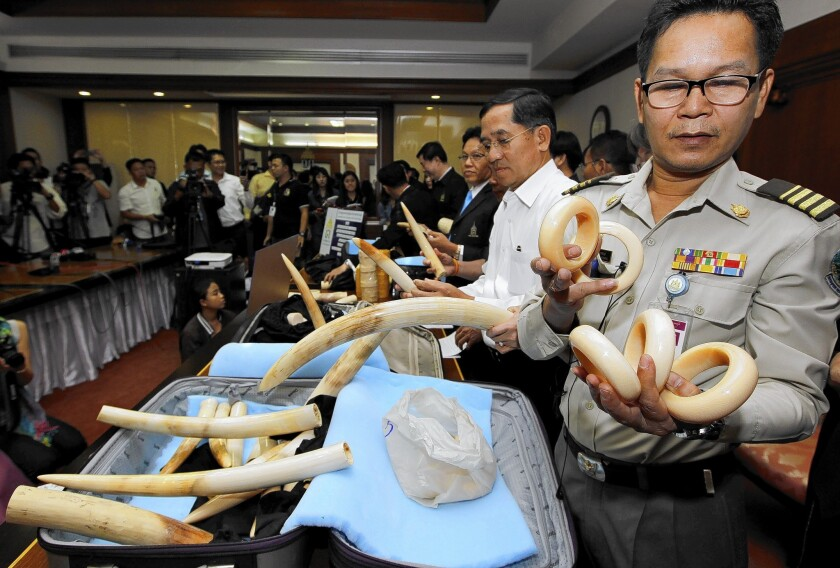 California is the second-largest market for ivory in the U.S., after New York. Above, Thai officials display confiscated smuggled African elephant tusks during a news conference in Bangkok in July.