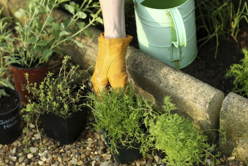 March is a great time to plant an herb garden.