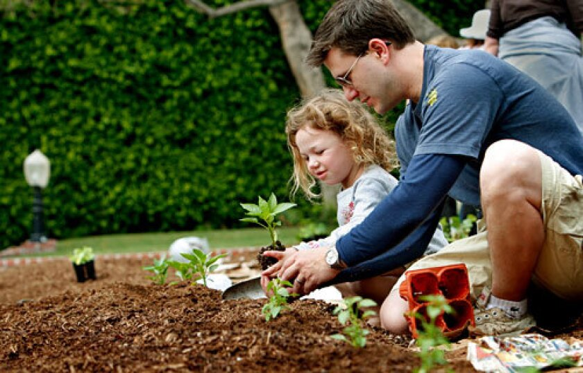 URBAN ACRES: Joshua Mogin and his daughter Joy plant in a Heart Beet Gardening project.