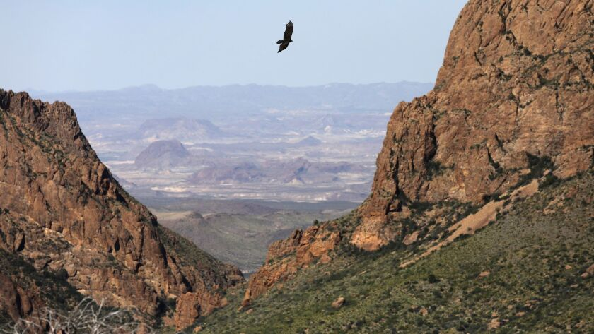 A falcon flies over the Chisos Basin in Big Bend National Park in Texas.
