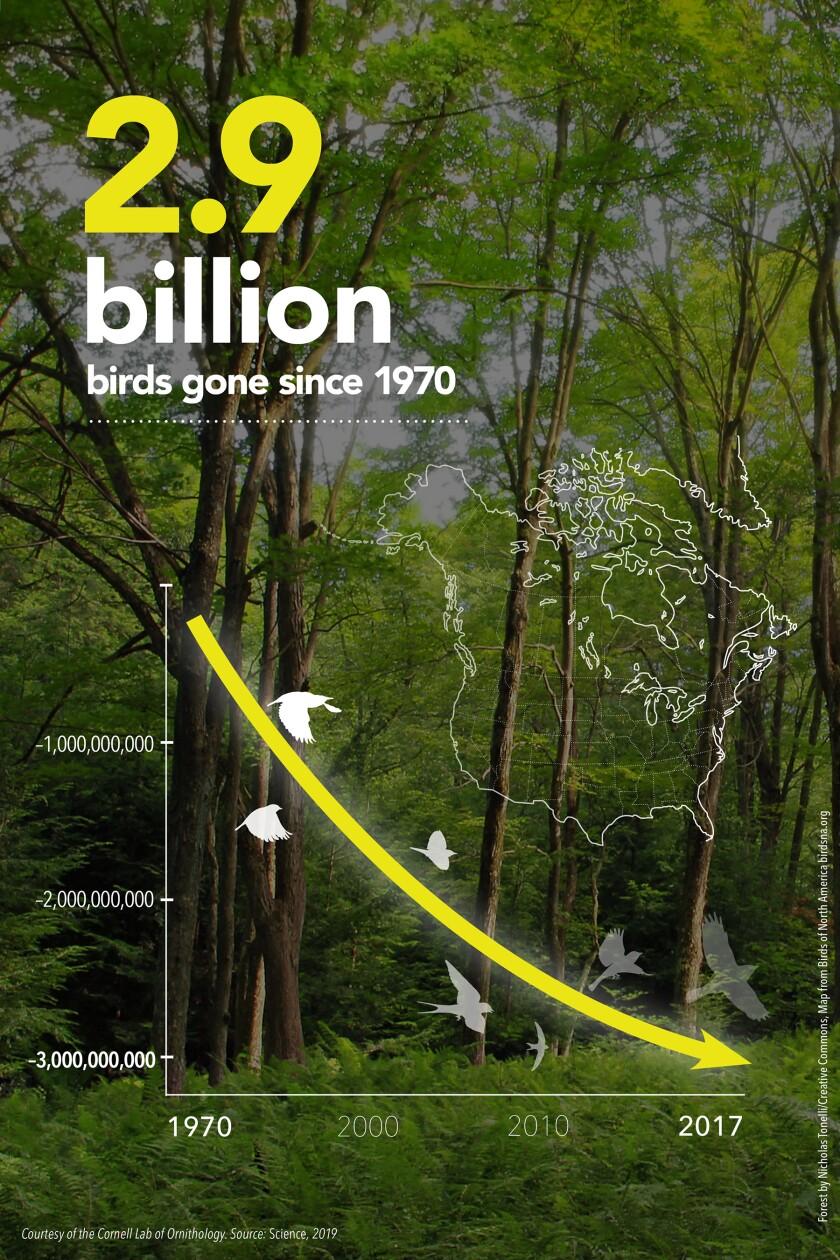 The decline of birds since 1970
