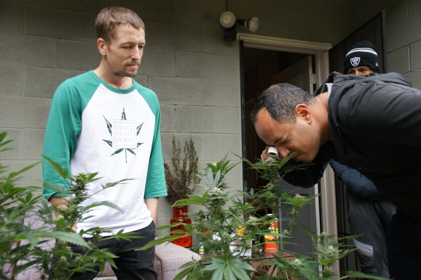 Marc Emmelmann runs cannabis education-centric Green Carpet Growing from his home in Bankers Hill.