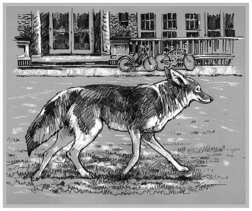 """In """"Coyote at the Kitchen Door,"""" Stephen DeStefano portrays the coyote as an American icon living at the edges of human habitations."""